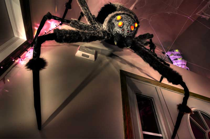 Giant Spider, Prepared to Drop Down on Unsuspecting Halloween Guests