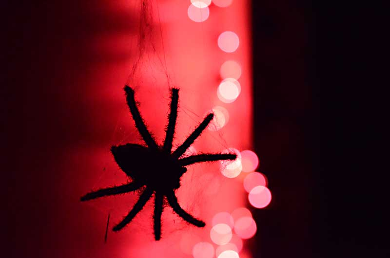 Silhouette of Spider back-lit against Halloween Lights